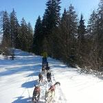 Schlittenhunde-Tour